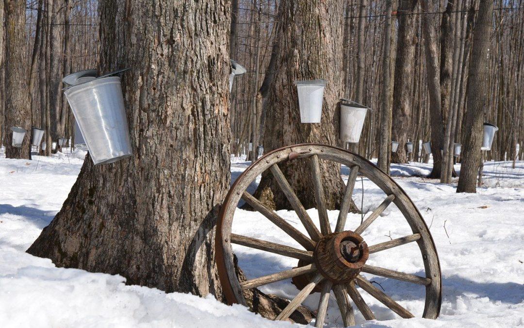 Lo sciroppo d'acero e il furto del secolo in Québec